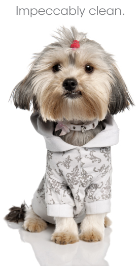 Cute Dog Wearing Shirt